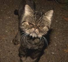 Awww, meow kitty.